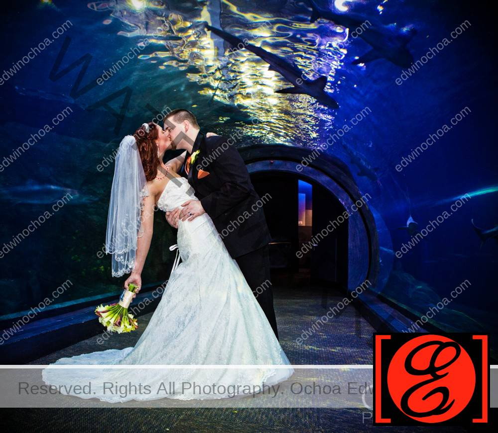 Adventure Aquarium Wedding Catherine And Shawn