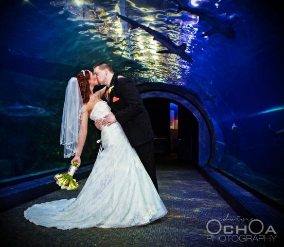 Adventure Aquarium Wedding
